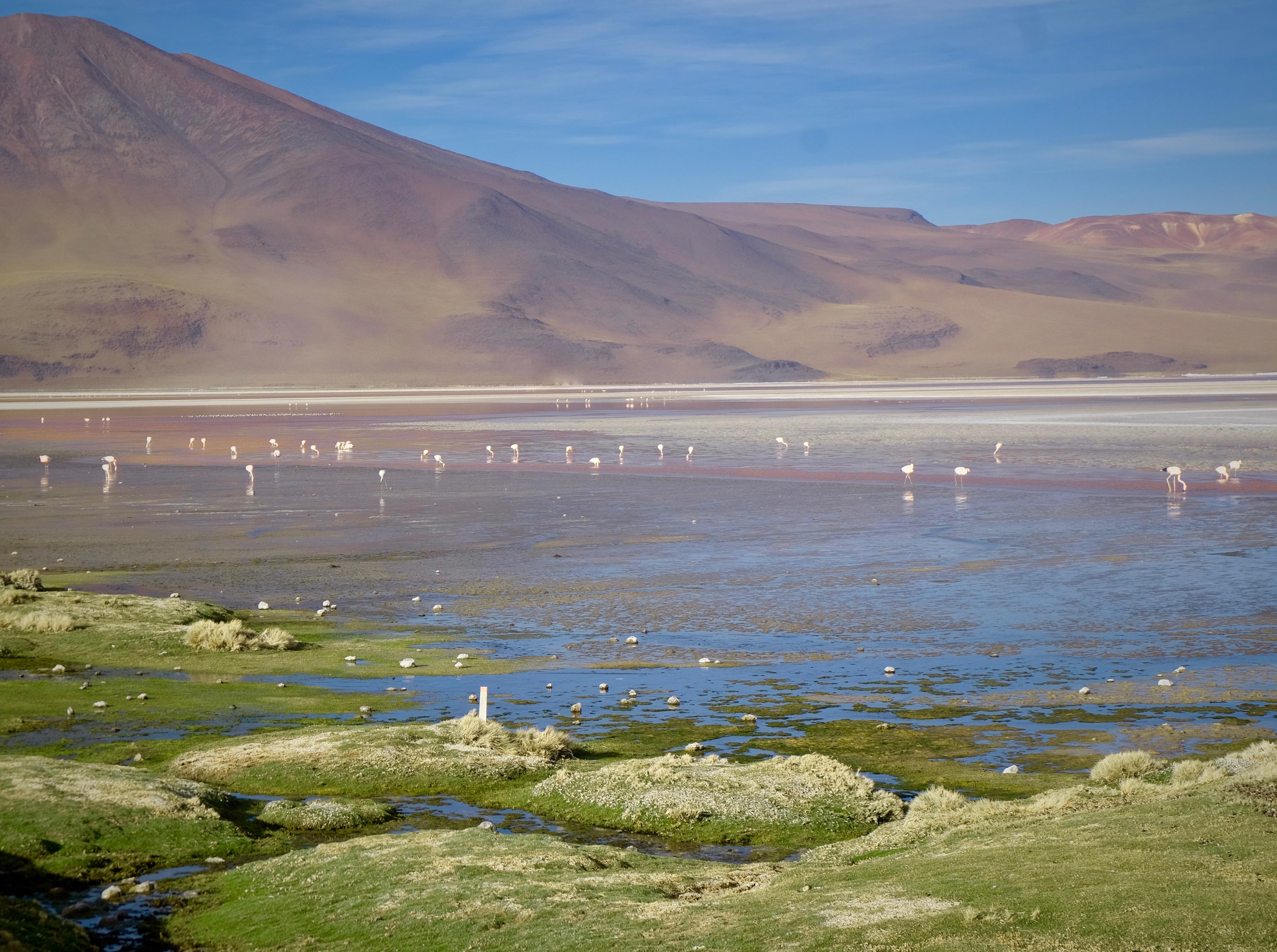 Laguna Colorada Uyuni Bolivia lake